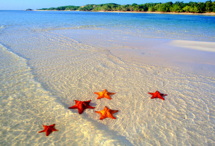 It's a Matter of Perspective … the Story of the Starfish